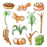 Cukrowy słodki trzciny uprawiać ziemię i przemysłu ręka rysowałem set ilustracja wektor