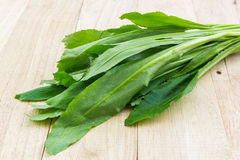 Culantro or Parsley. Royalty Free Stock Photography