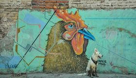 07/07/2018, Culiacan, Sinaloa, Mexico: A dog with a bandana sits in front of a rooster. 07/07/2018, Culiacan, Sinaloa, Mexico: A dog with a bandana sits in stock photos