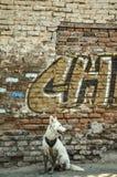 07/07/2018, Culiacan, Sinaloa, Mexico: Een hond met een bandana zit voor een afbrokkelende muur stock foto's