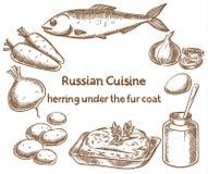 Culinária do russo Arenques sob um casaco de pele, ingredientes, vetor s Fotos de Stock Royalty Free