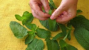 Culinary aromatic herbs stock video