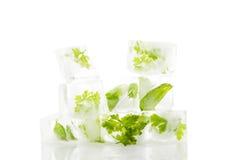 Culinary aromatic herbs. Stock Photo