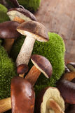 Culinary edible mushrooms. Stock Photos