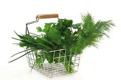 Culinary herbs royalty free stock photo
