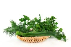 Culinary herbs Stock Image