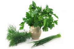 Culinary herbs Stock Photo
