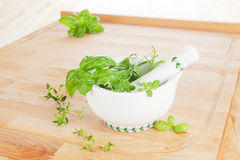 Culinary herbs. Royalty Free Stock Image