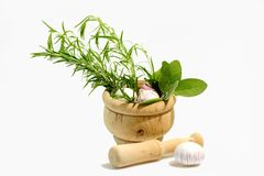 Culinary Herbs Royalty Free Stock Image