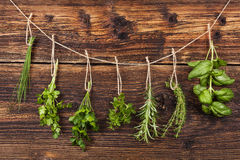 Culinary herbs. Stock Image