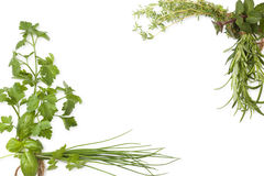 Culinary herbs background with copy space. Stock Images