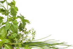 Culinary herbs background with copy space. Royalty Free Stock Photography