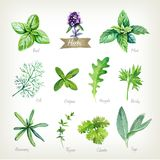 Culinary herbs collection watercolor illustration with clipping paths Royalty Free Stock Photography