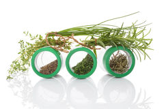 Culinary herbs. Stock Images