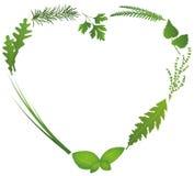 Culinary Herbs Heart Stock Photos