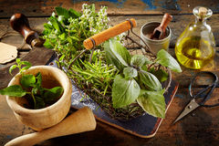 Culinary herbs, olive oil and pestle on table. Various fresh green culinary herbs, corked bottle of olive oil, mezzaluna, scissors and pestle on table Royalty Free Stock Image