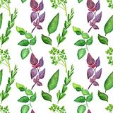 Culinary Herbs Set: Bay Leaves, Chervil, Rosemary, Basil, Purple Basil royalty free illustration