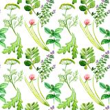 Culinary Herbs Set: Mint, Dill, Parsley, Chives, Thyme, Oregano, Rucola. Culinary herbs variety, seamless pattern design on white background, hand painted Stock Image