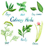 Culinary Herbs Set: Sage, Mint, Bay Leaves, Dill, Parsley, Chives. Isolated set hand painted watercolor illustration Royalty Free Stock Image