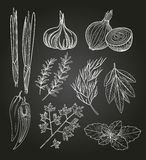 Culinary Herbs and Spices. Vintage Illustration Stock Photo
