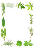 Culinary and Medicinal Herbs Royalty Free Stock Photography