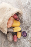 Culinary potatoes. Royalty Free Stock Images