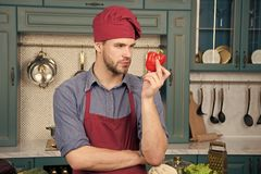 Culinary recipe with pepper. Chef cooking sweet pepper. Vegetarian cuisine ingredient. Man chef wear apron cooking in. Kitchen. Man cook vegetarian recipe royalty free stock images