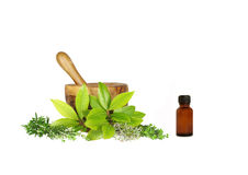 Culinery and Medicinal  Herbs Stock Photography