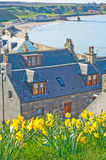 Cullen in Springtime. The fishing port of Cullen on the Scottish North East Coastal Trail seen at daffodil time Royalty Free Stock Images