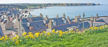 Cullen in Springtime. The fishing port of Cullen on the Scottish North East Coastal Trail seen at daffodil time Stock Photos