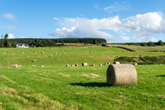 CULLODEN, INVERNESS/SCOTLAND - AUGUST 28 : Farm at Culloden  nea Royalty Free Stock Image