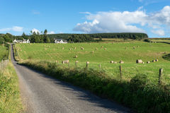 CULLODEN, INVERNESS/SCOTLAND - AUGUST 28 : Farm at Culloden nea stock photos