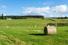 CULLODEN, INVERNESS/SCOTLAND - SIERPIEŃ 28: Gospodarstwo rolne przy Culloden nea Obraz Royalty Free