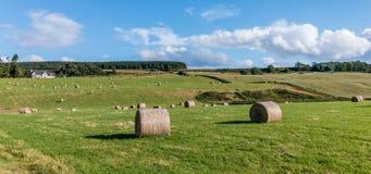 CULLODEN, INVERNESS/SCOTLAND - SIERPIEŃ 28: Gospodarstwo rolne przy Culloden nea Zdjęcie Royalty Free