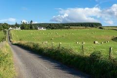 CULLODEN, INVERNESS/SCOTLAND - SIERPIEŃ 28: Gospodarstwo rolne przy Culloden nea Zdjęcia Stock