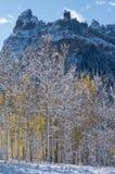 Culmine Ridge con Aspen Trees Back Lit Fotografia Stock Libera da Diritti