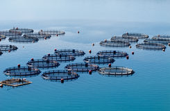 Cultivación de los pescados Fotografía de archivo libre de regalías