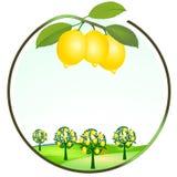 Cultivación del limón stock de ilustración