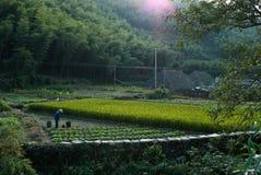 Cultivación en pueblo de montaña chino Fotos de archivo