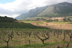 Cultivación y montaje de los viñedos. Sicilia Fotografía de archivo