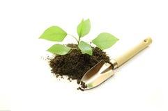 Cultivado de uma planta nova em um fundo branco imagem de stock royalty free
