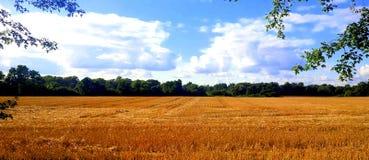Cultivando o Hayfield Foto de Stock Royalty Free