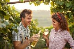 Cultivando os pares que bebem um vidro do vinho após a colheita Fotografia de Stock