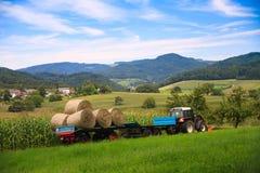 Cultivando um campo de milho Fotografia de Stock Royalty Free