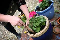 Cultivando un huerto, plantando las flores Foto de archivo