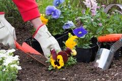 Cultivando un huerto, plantando las flores Fotos de archivo