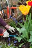 Cultivando un huerto, plantando las flores Imagenes de archivo
