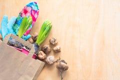 Cultivando un huerto y plantando concepto Bolsa de papel que hace compras con el jacinto de los almácigos y los bulbos del gladio Imágenes de archivo libres de regalías