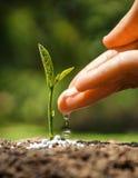 Cultivant et consolidant la jeune plante de jeune usine Images stock