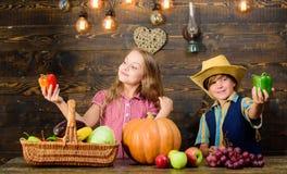 Cultivar ensina a crianças de aonde seu alimento vem Exploração agrícola da família Irmãos que têm o divertimento Crianças que ap fotos de stock